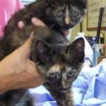 kittens A
