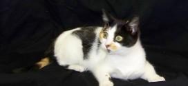 10-08-14 12314 - ROSE cat
