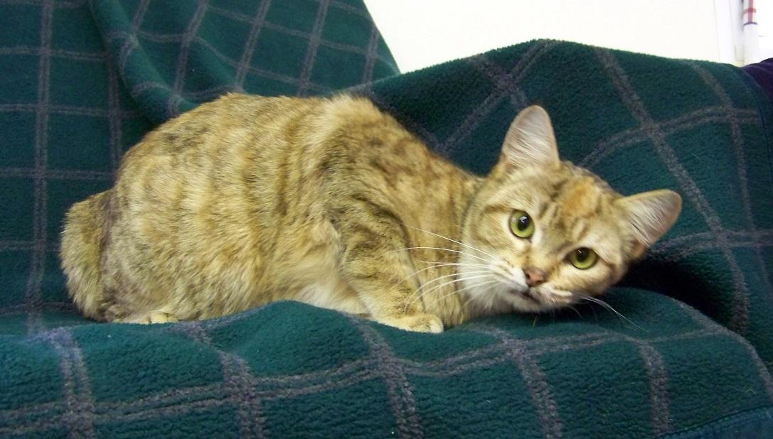 01-20-15 12455 HEATHER - cat (1) revised