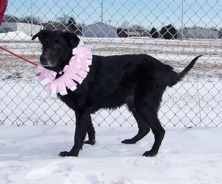 01-28-15 12459 Tess dog