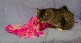 02-11-15 12480 ELLEN - cat