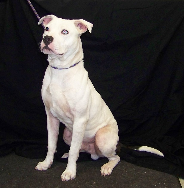 02-24-15 12486 White dog 1 - Copy