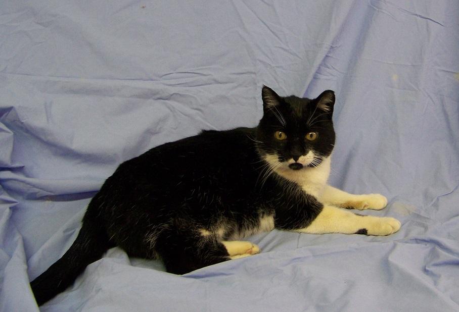 03-04-15 12502 MAGOO - Cat.