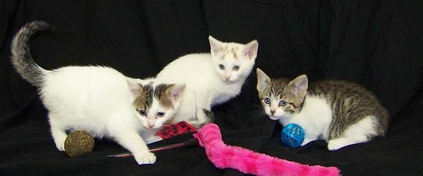 05-20-15 12627, 12629, 12631 3 kittens 01