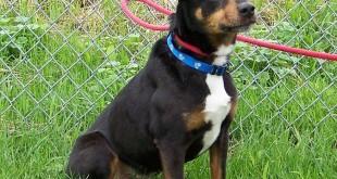 06-17-15 12674 TERRY terrier 01