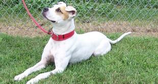 07-29-15 12724 MALLOR dog 2