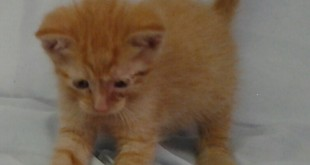 April 19 2016  Carson orphan kitten