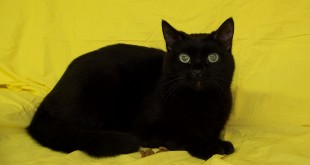 05-10-16 000138 SASSY cat