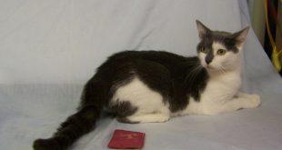 06-21-16 BIO16-000161 STAR cat