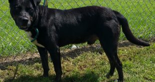 2016 8 Aug 23     JD  Lab Rott