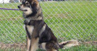 09-20-16-bis16-000216-axel-dog
