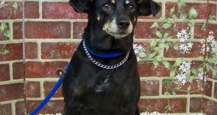 09-26-16-bis16-000214-fatima-dog