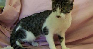 10-11-16-bio16-000259-princess-cat
