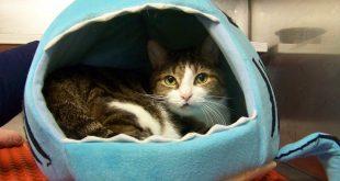 11-01-16-bio16-000308-denozo-cat