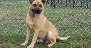 11-08-16-bis16-000283-elwood-dog