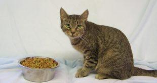 11-15-16-bio16-000311-missy-cat