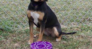 12-27-16-bio16-000369-lia-dog