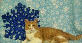 01-03-17-bio16-000380-whiskers-cat